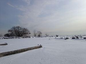 Frozen world--geese