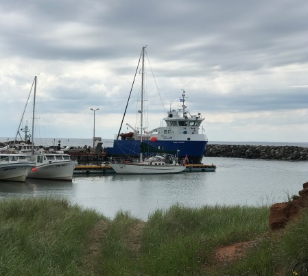 busy harbour (1)