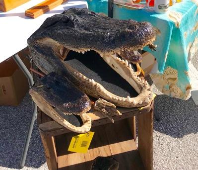 alligator heads (1)