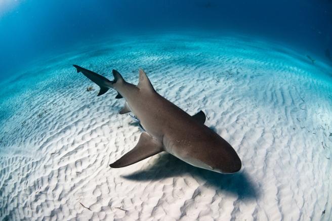 Sharks_Intro