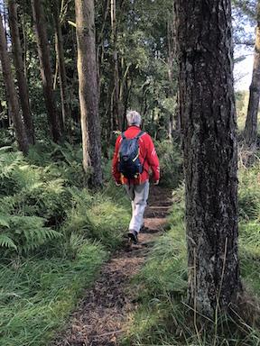 forest walk1